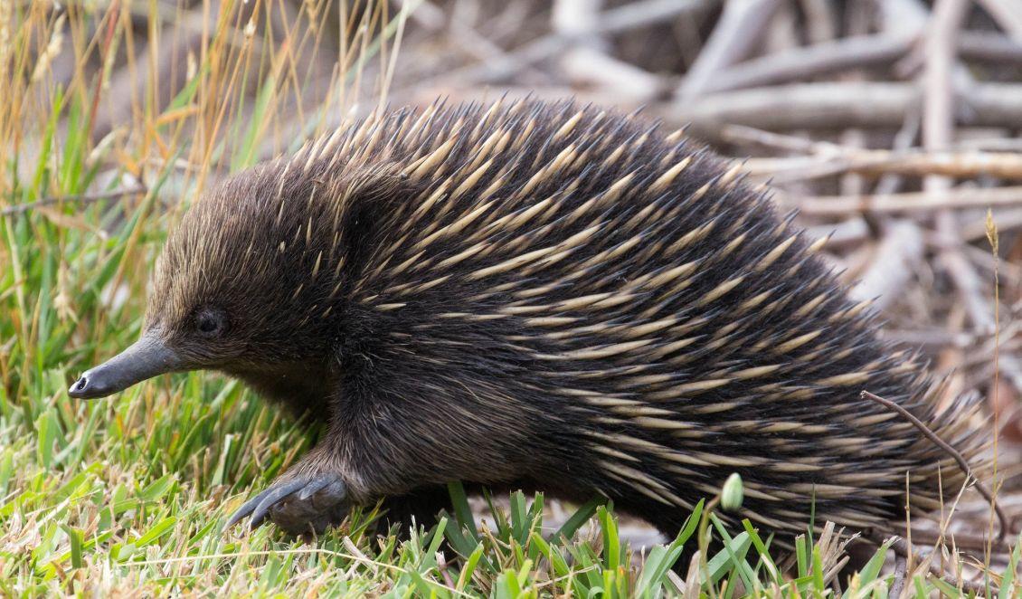 Teil 3 der Artikelserie über Australien > umweltnetz-schweiz