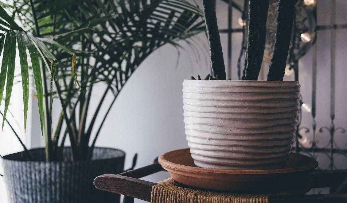 Zimmerpflanzen Sind Nicht Nur Schön Anzusehen Sie Verbessern Auch Luftqualität In Den Wohnräumen