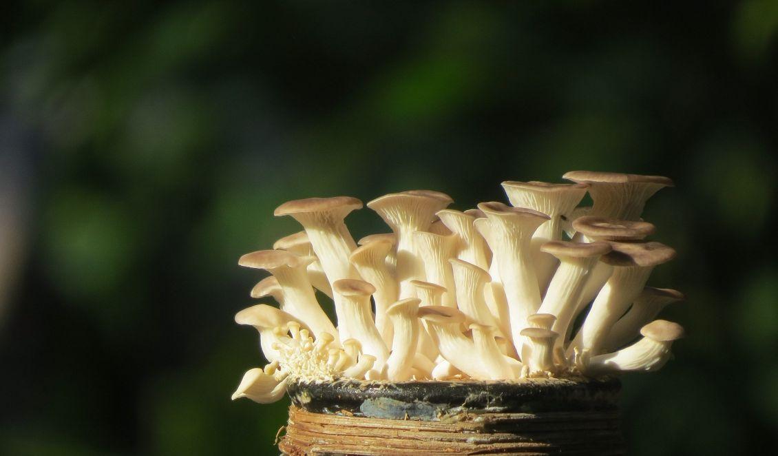 So Kann Man Seine Eigenen Pilze Anbauen Umweltnetz Schweiz